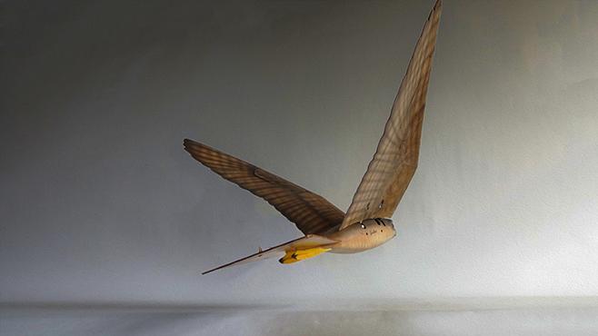 Robirdy – ptaki XXI wieku.