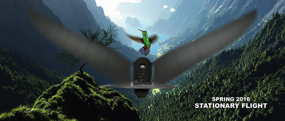 Bioniczne ptaki pod choinkę. Szykuj się na zaćmienie słońca.