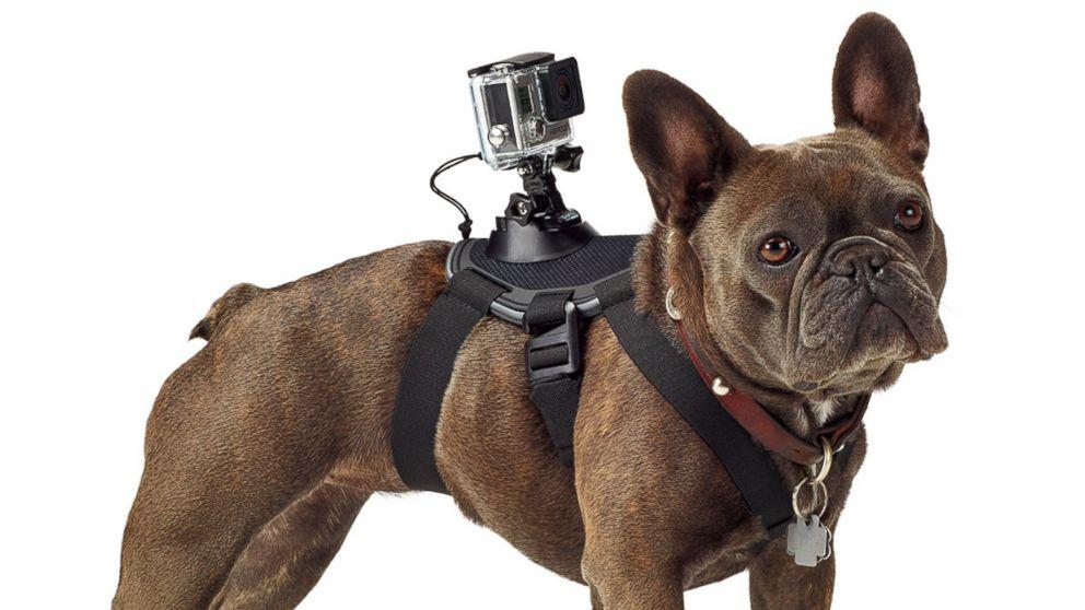 przykładowe użycie, fot: abcnews.go.com/Technology/gopros-60-harness-turns-dogs-filmmakers/story?id=25127633