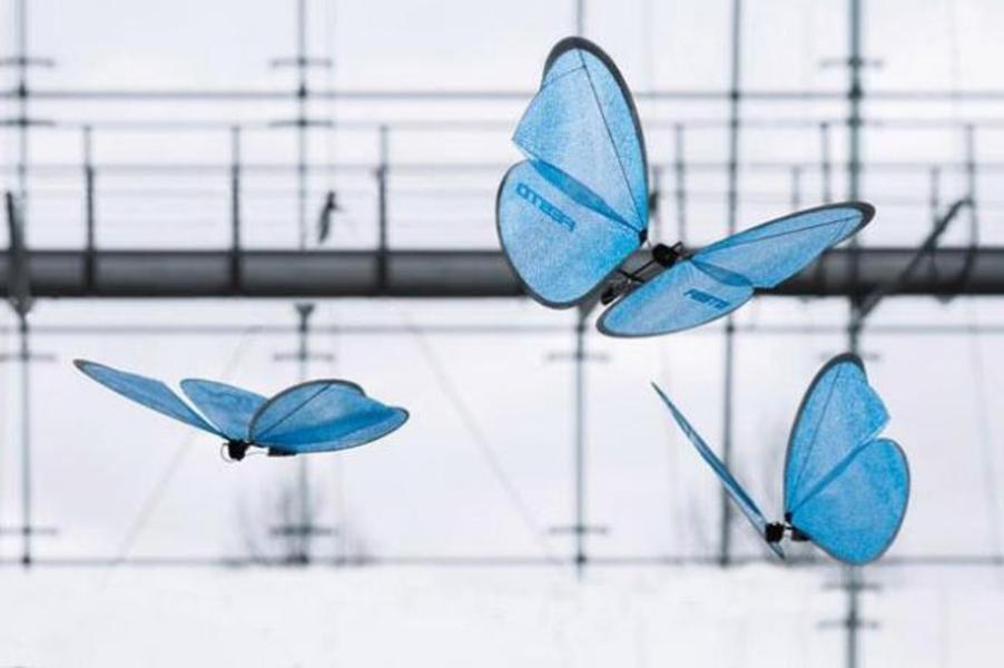 motyle, fot: Festo.com