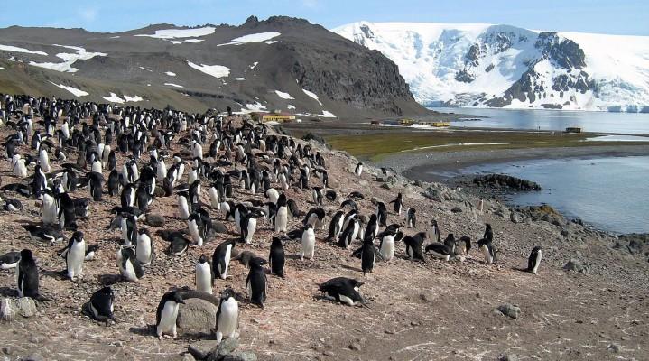 Liczenie baranów przed snem to pestka. Spróbuj policzyć pingwiny!