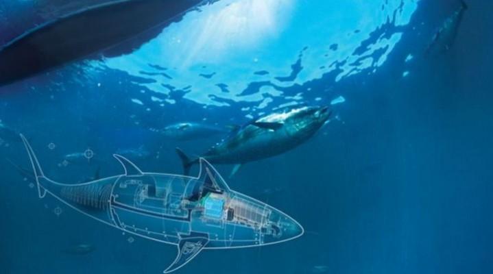 Podwodne bezzałogowce.